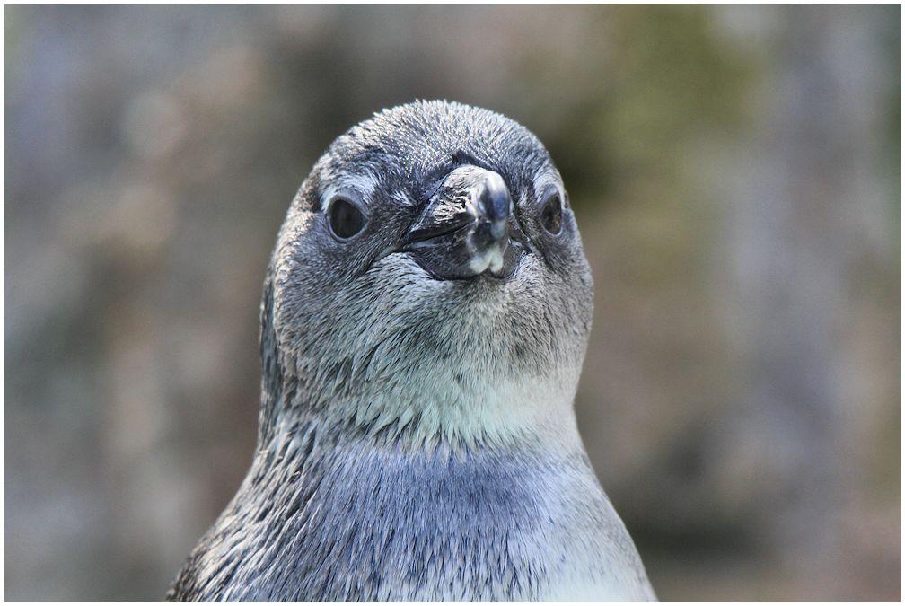 vom pinguin...