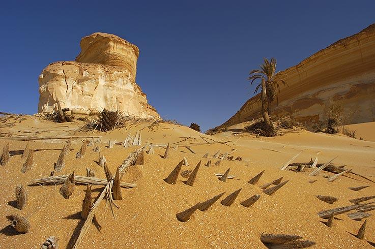 Vom Sand abgeschliffene Palme