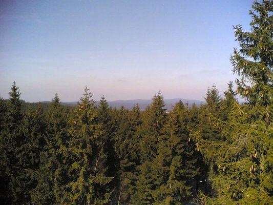 Vom Schneckenstein aus über den Wald
