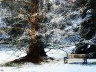 Vom Schnee geküßt...