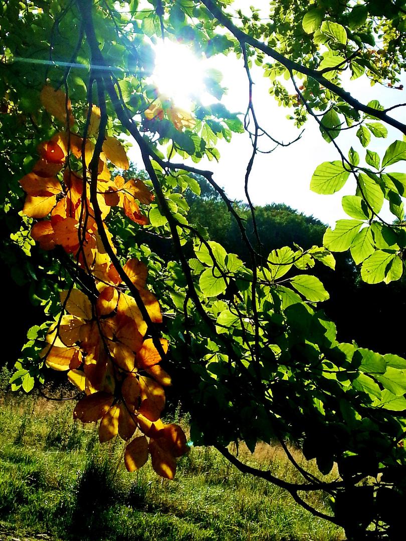 Vom Sommer in den Herbst...