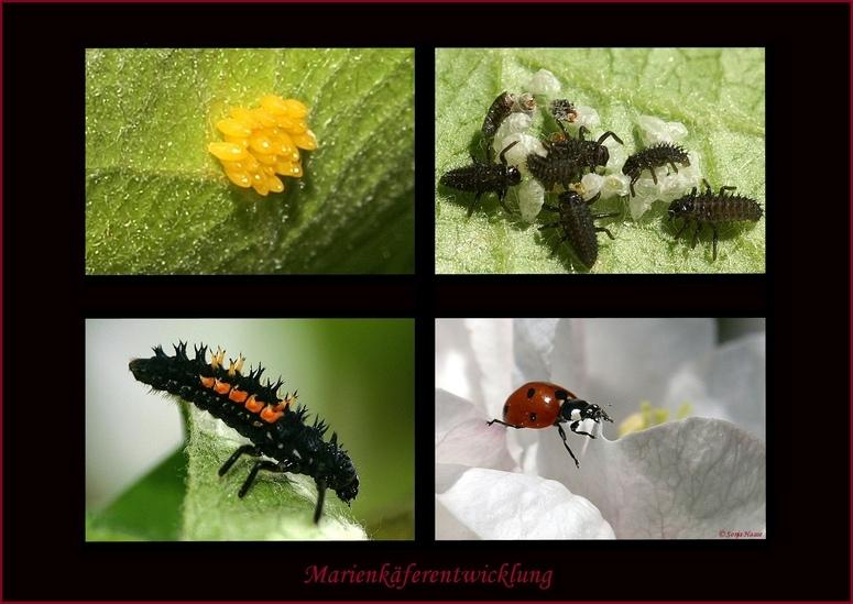 Vom Stachelmonster zum schicken Käfer