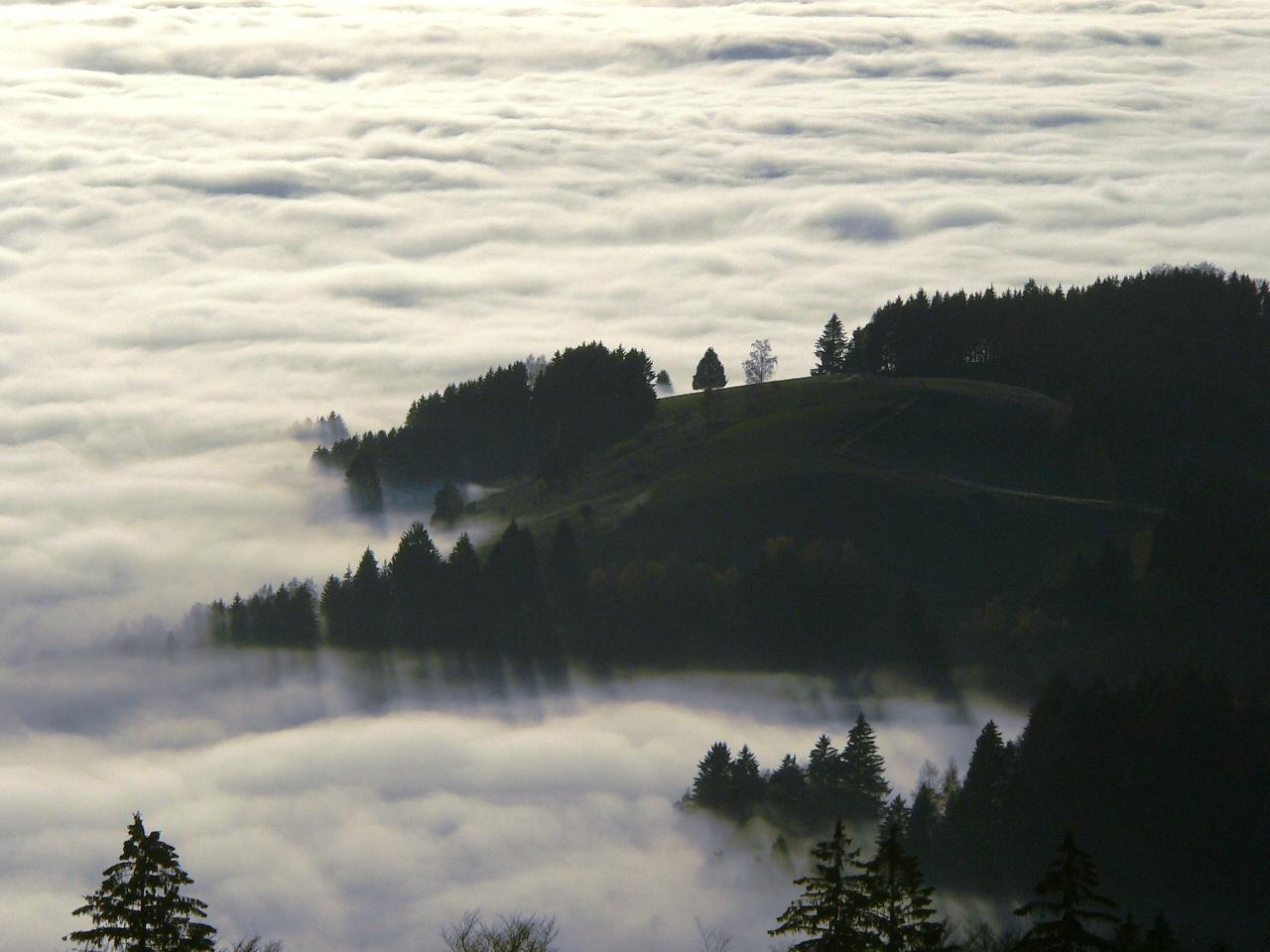 vom Stohren (Schwarzwald) hinunter zum Münstertal, heute