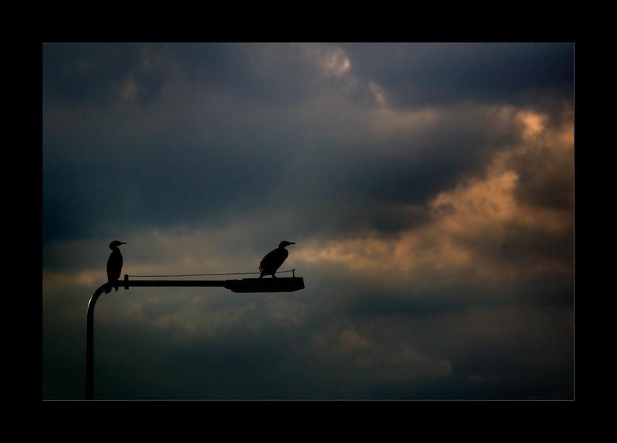 Vom Vogel, der hinaus in Welt zog, um König zu werden