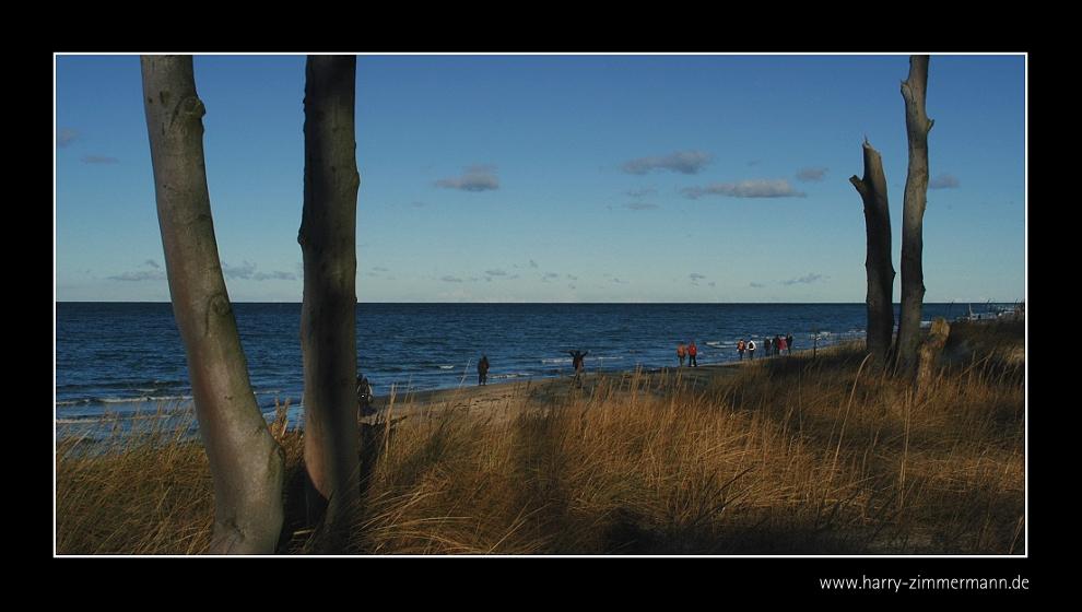 Vom Wald direkt an den Strand