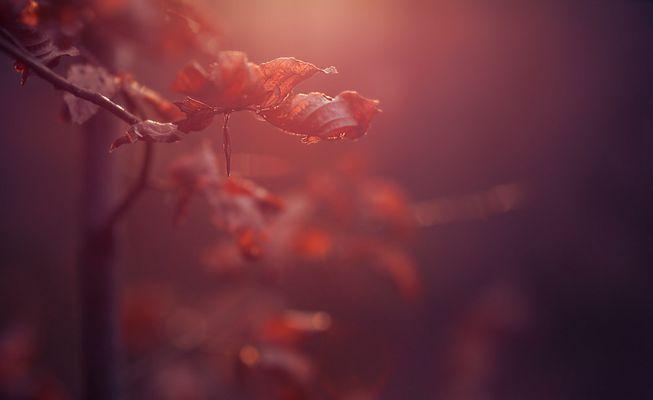 Vom Wald lasse ich mich am liebsten in die Nacht begleiten.