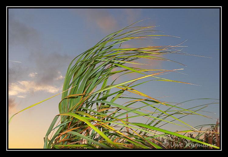 .. vom Winde gebeugt... (01461)