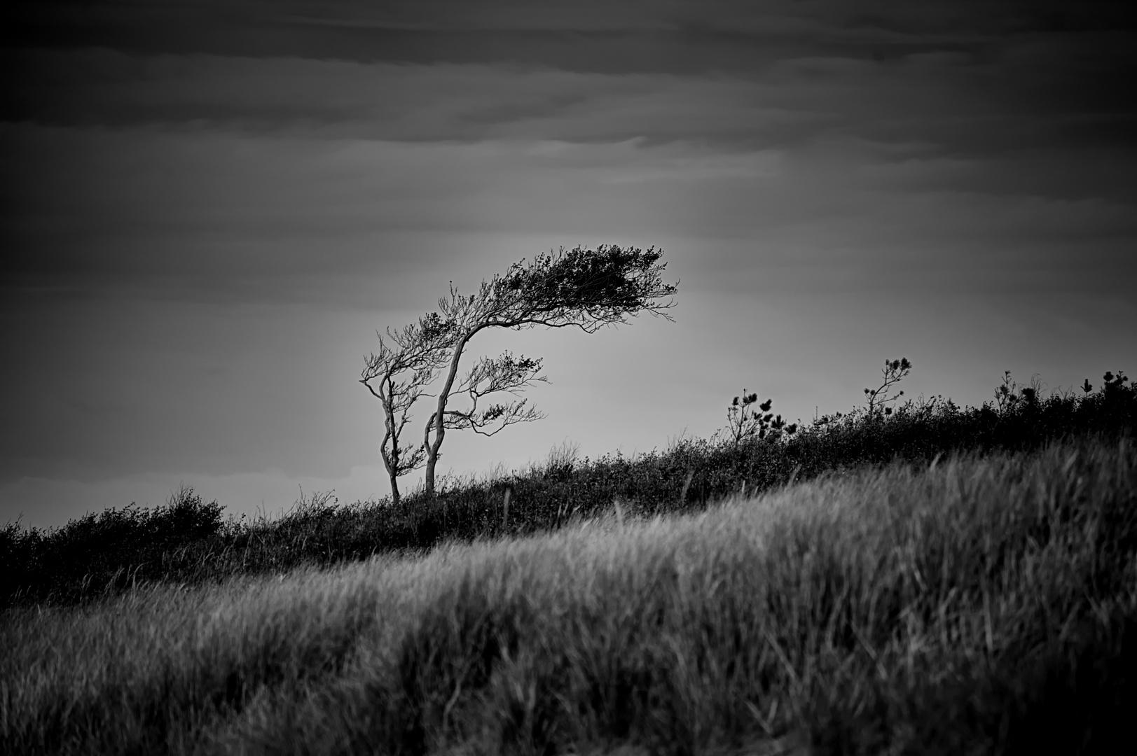 Vom Winde gezeichnet