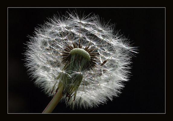Vom Winde verweht....