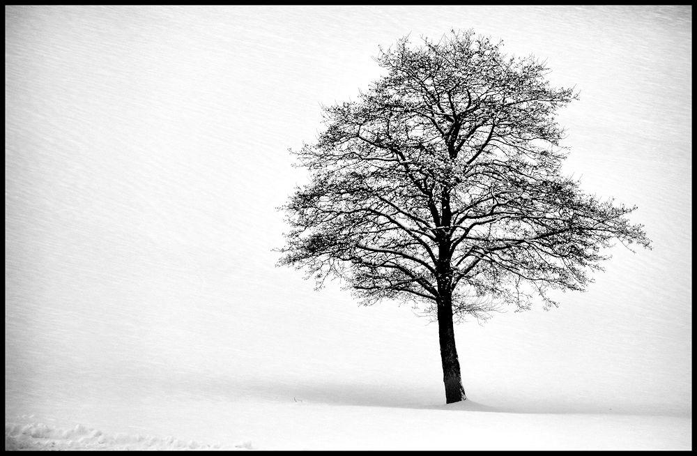 vom winterbaum...