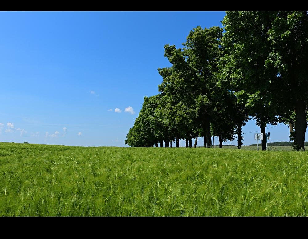 ... von Bäumen gesäumt ...