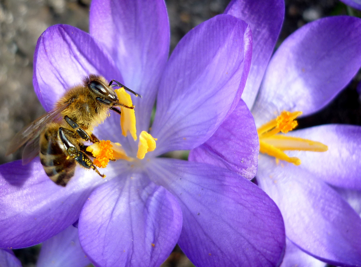 ... von Bienchen und Blümchen