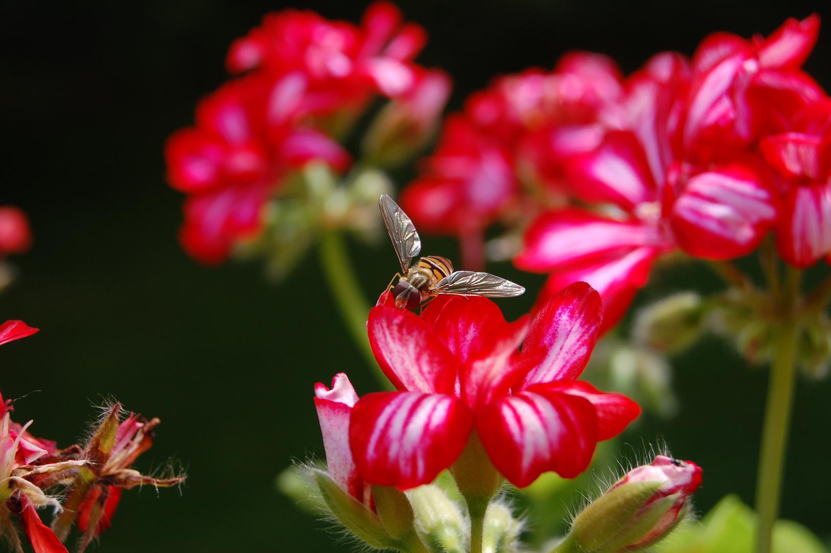 Von Bienen und Blumen...