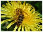 ..von Bienen und Blumen...