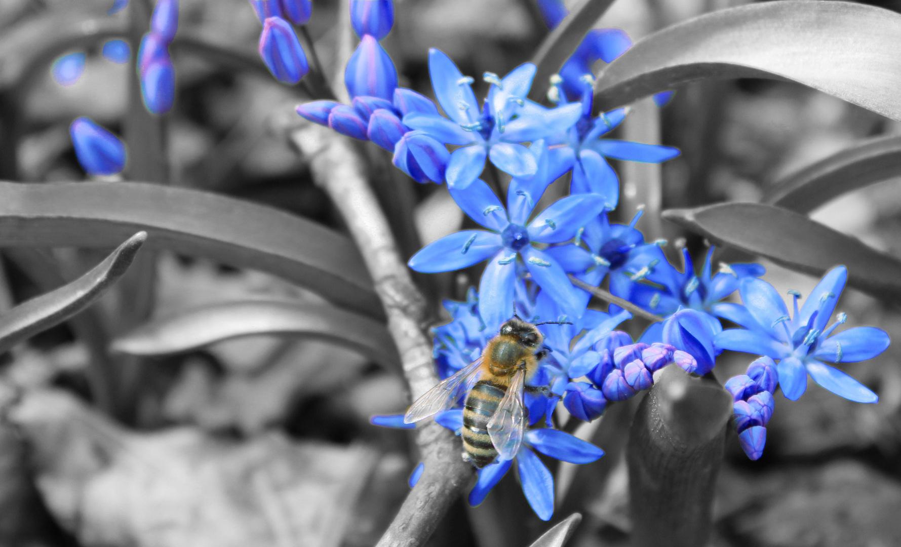 ...von Bienen und Blumen