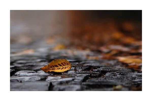 Von Blättern, Regen und Wegen