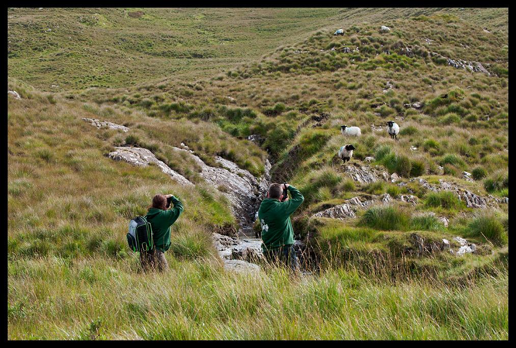 Von dem Glück, Schafe fotografieren zu dürfen