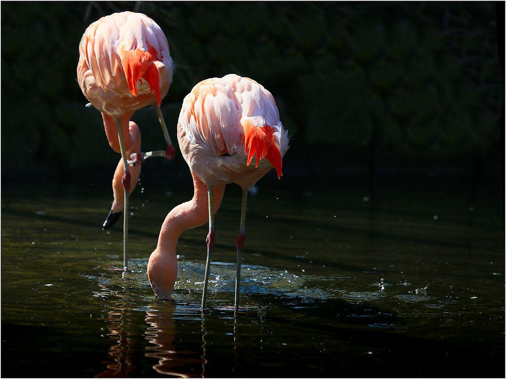 von den flamingos...