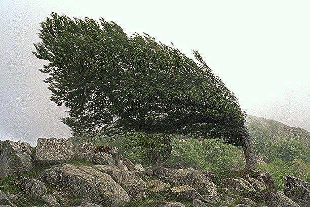 Von der Natur geformt
