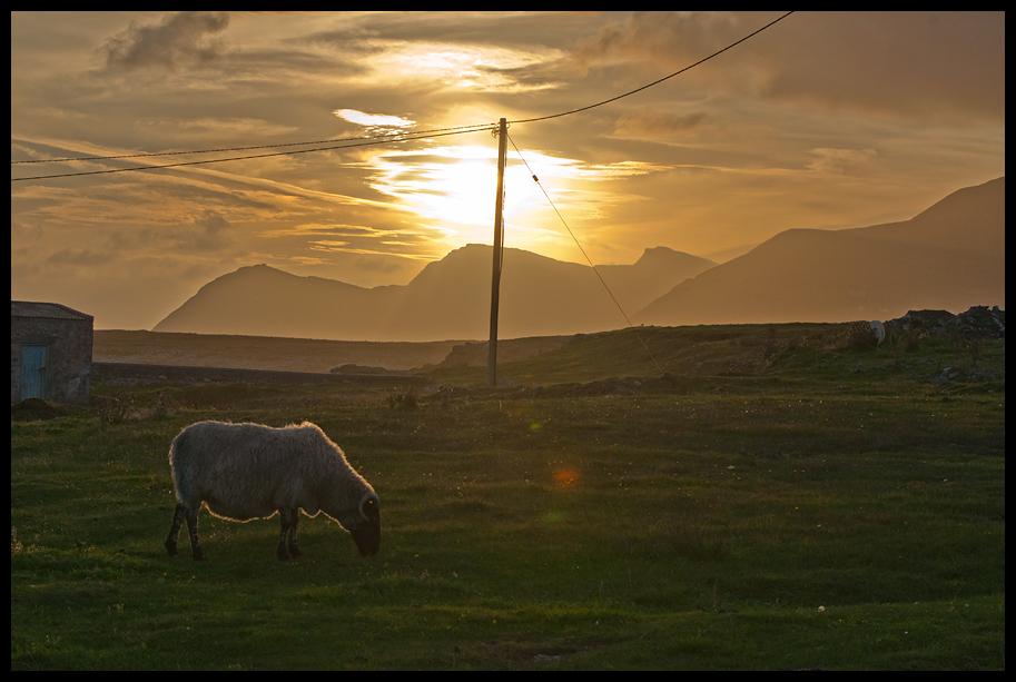 Von der Romantik des Sonnenunterganges mit Schaf