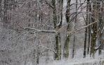 Von der Schönheit der Jahreszeiten , des Winters