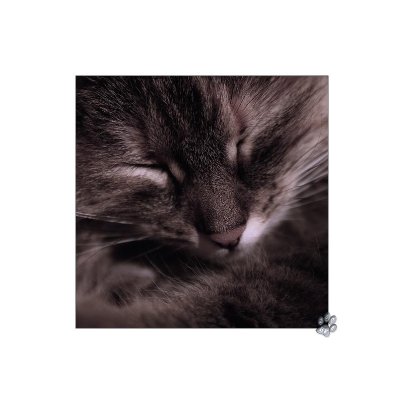 * Von einer Katze... *