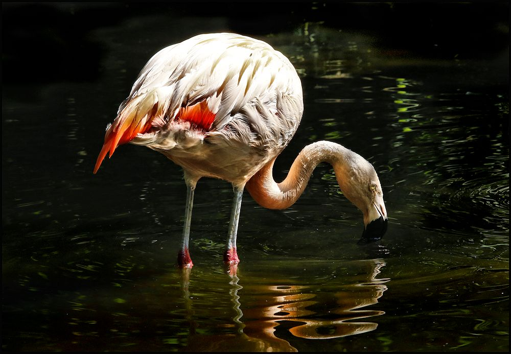 von flamingos....
