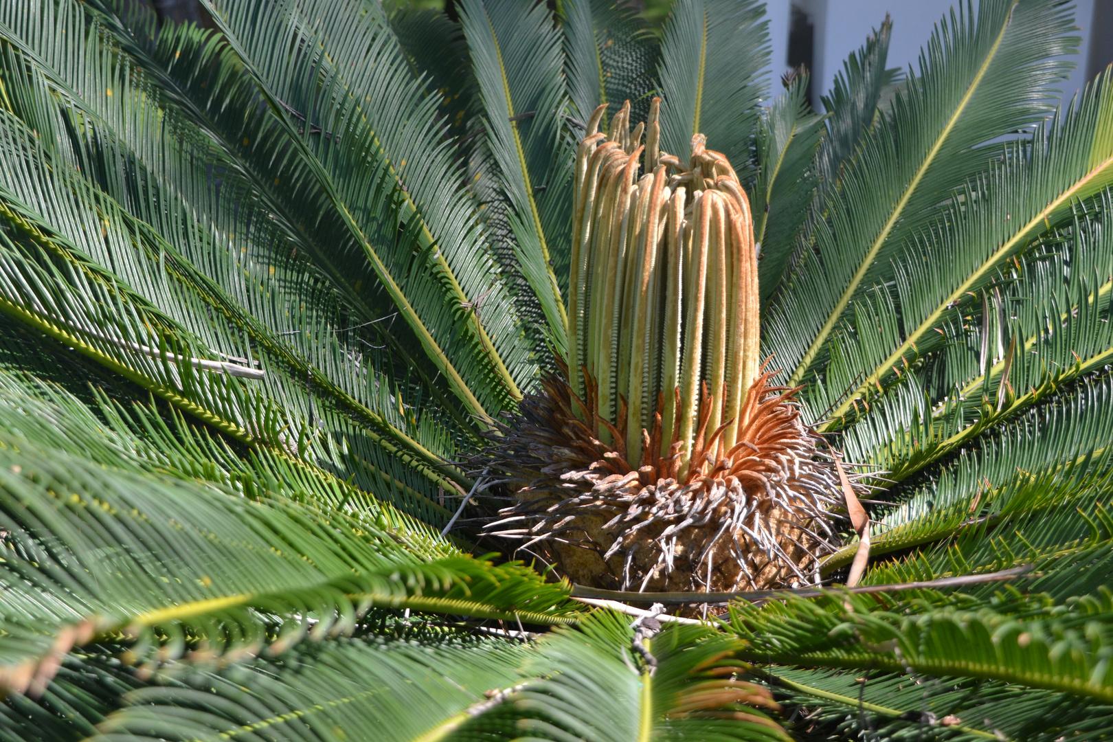 von Palmblättern