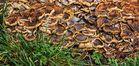Von Pilzen bedeckter Baumstumpf!