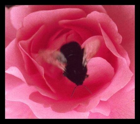 Von Rose zu Rose