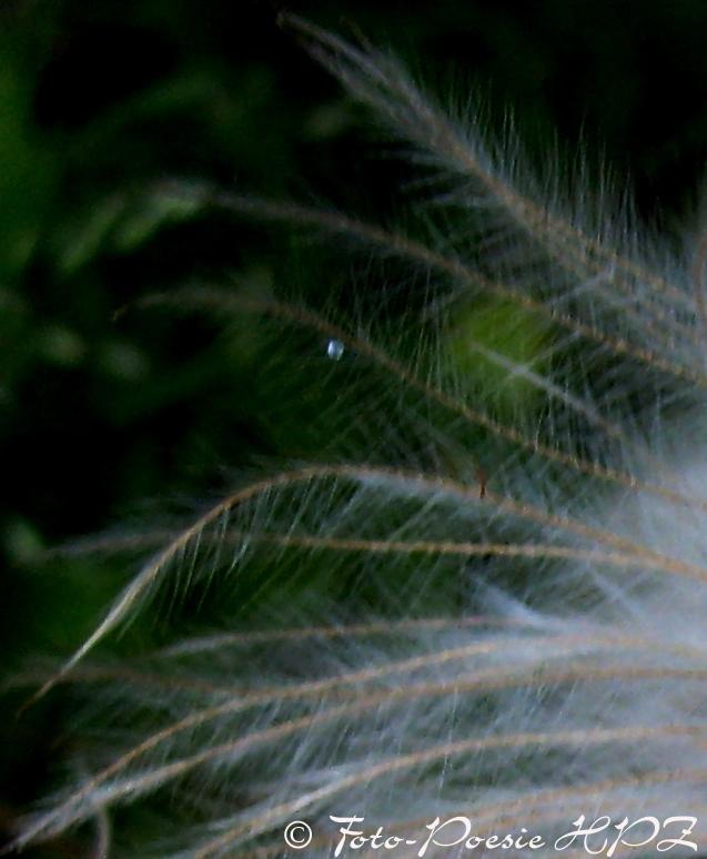 Von sanftem Wind getragen oder Feder mit Träne