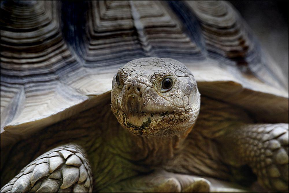 von schildkröten...
