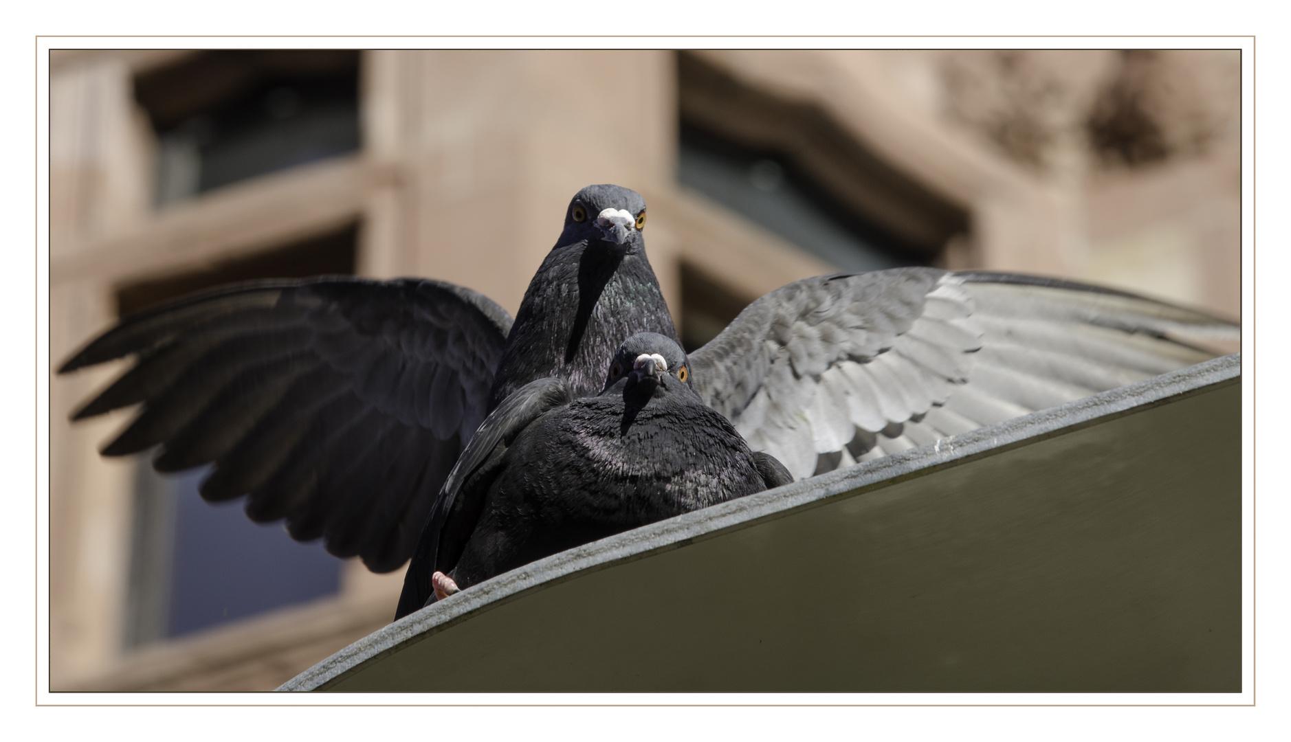 Von Tauben und Vögeln...