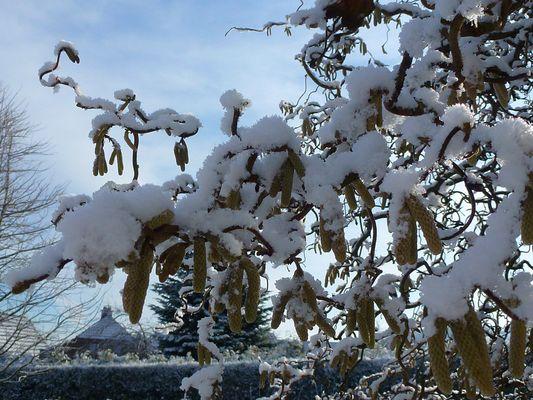 -Von wegen Winter ade' im Solling-