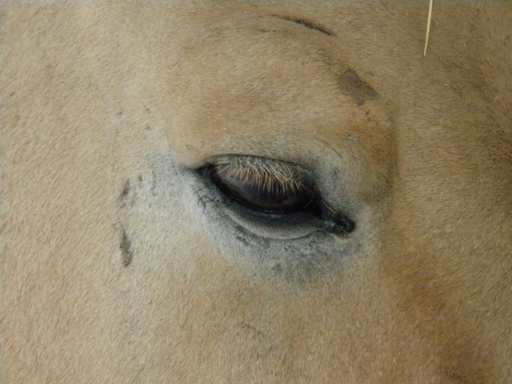von welchem Tier mag wohl das Auge sein...
