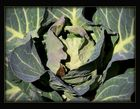 Vonya's winter cabbage.........