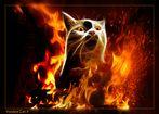 Voodoo Cat II
