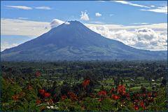 Vor 4 Wochen noch friedlich-Mt.Sinabung