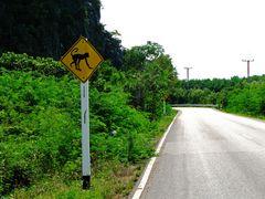 Vor Affen wird gewarnt...