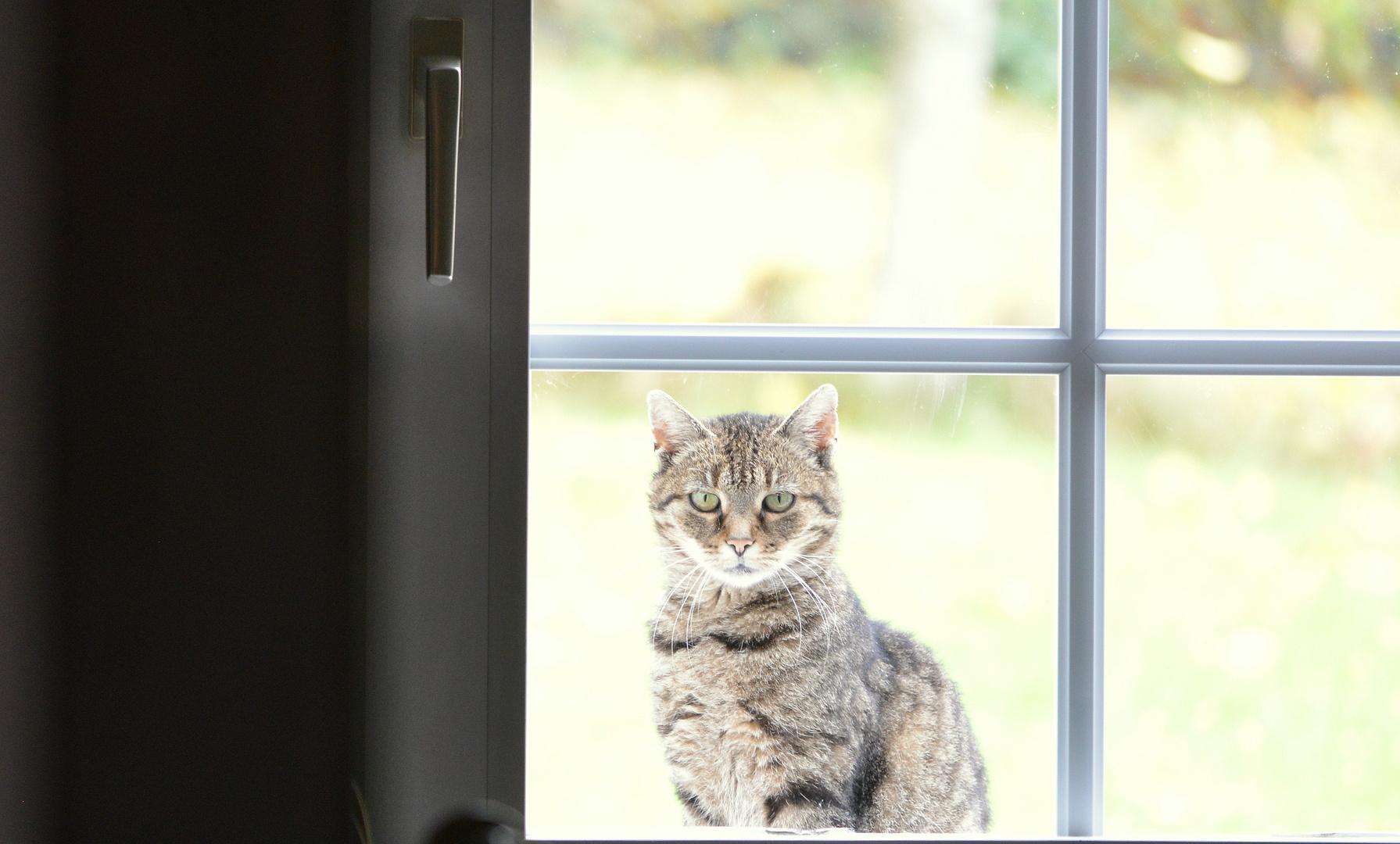 Vor dem Fenster