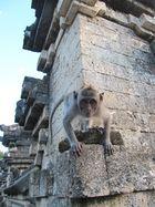 Vor dem Sprung im Affentempel Uluwatu