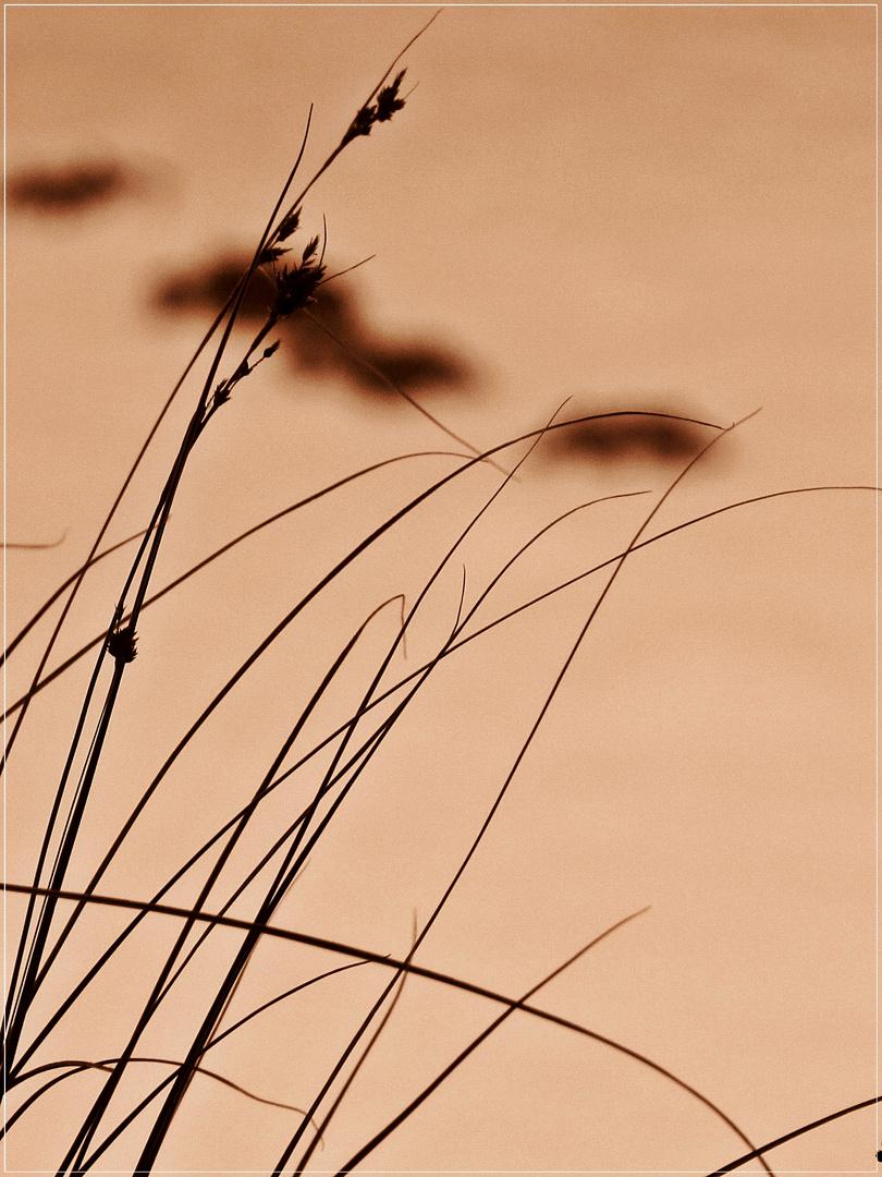 ...vor den Maulwurfshügeln - im Winter