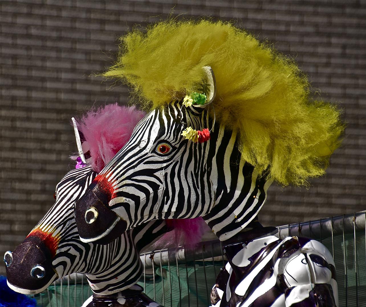 vor der miss zebra wahl