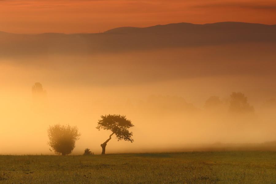 Vor der Nebelwand