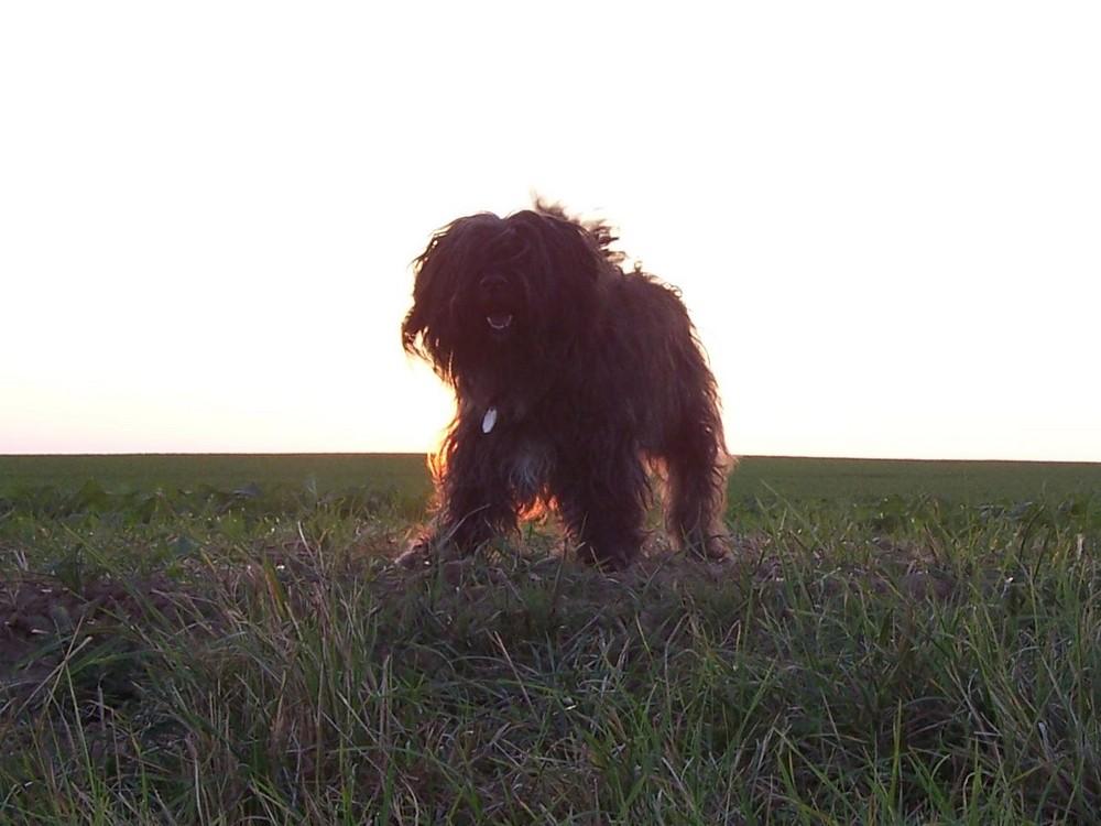 Vor der Sonne