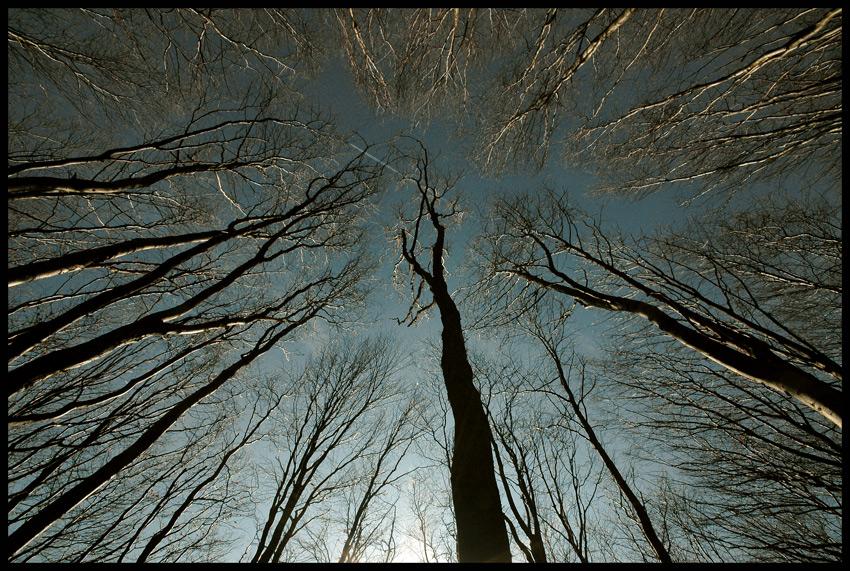 >Vor lauter Bäumen ...