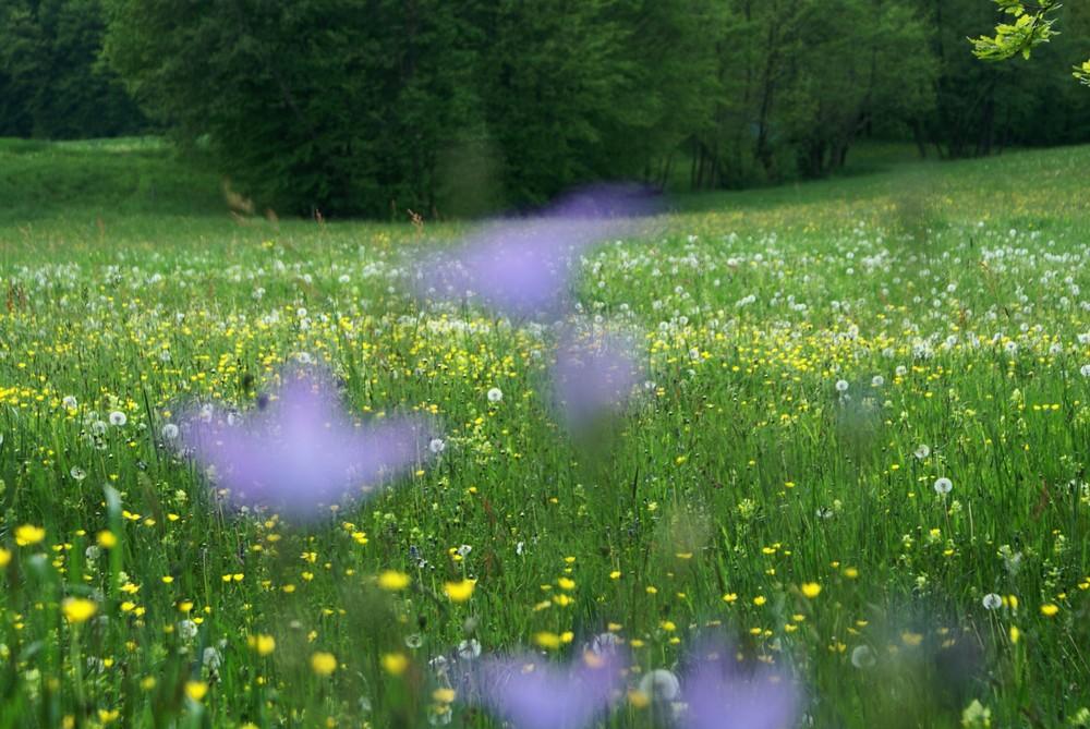 vor lauter Blumen..