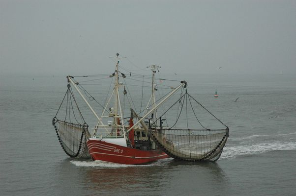 Vor Norderney (3)