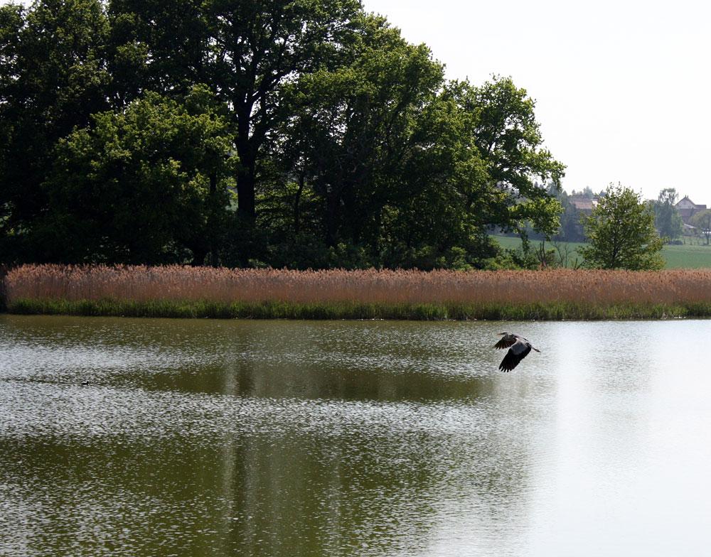 Vorbeiflug am Vogelschutzparadies