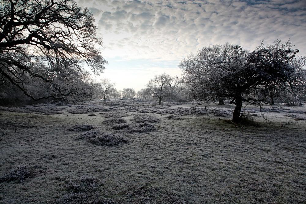 vorbote des winters